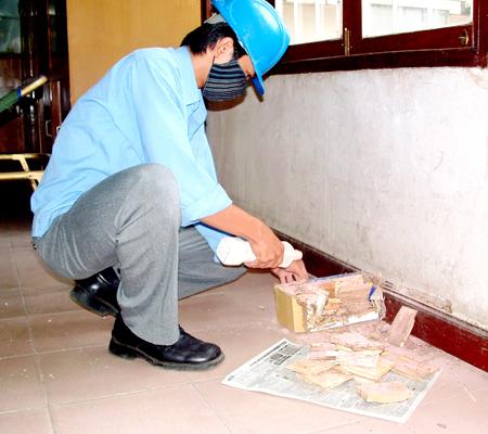 Công ty diệt mối uy tín tại Tuyên Quang