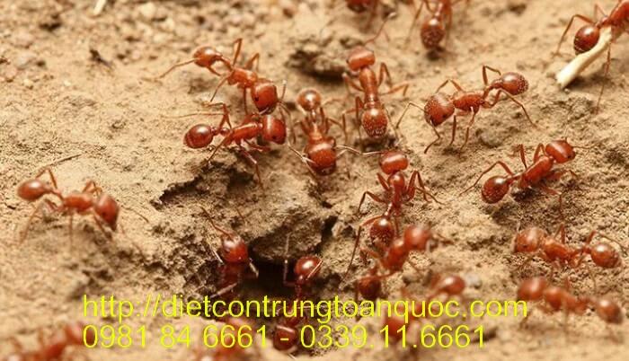 Dịch vụ diệt kiến uy tín tại Gia Lâm Hà Nội