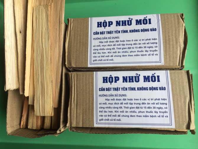 Dịch vụ diệt mối giá rẻ tại Nam Định