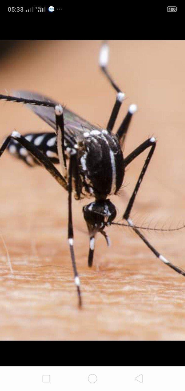 Phun muỗi tại nhà ở Bắc Giang