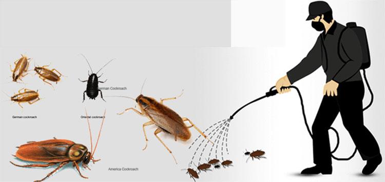 diệt côn trùng tận gốc