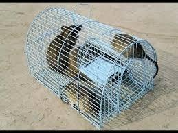Dịch vụ diệt chuột tại Bắc Giang
