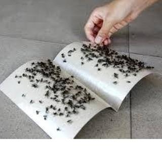 Cách diệt ruồi hiệu quả tại nhà bằng bẫy dính