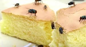 Ruồi đến vì thức ăn thừa - cách diệt ruồi hiệu quả tại nhà