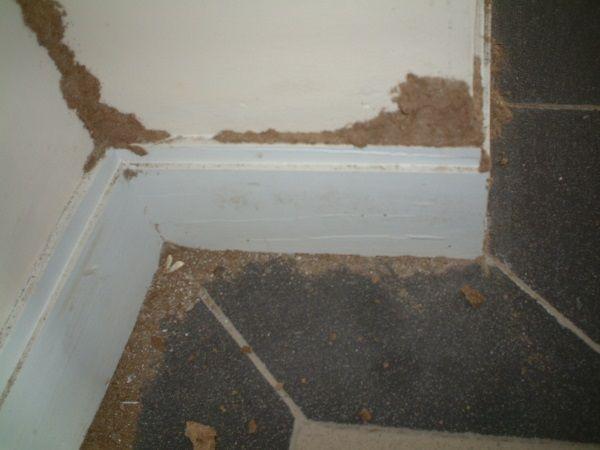 Tác hại của việc không phòng chống mối công trình xây dựng