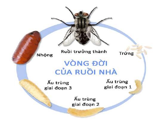 Vì sao phải tìm cách diệt ruồi giấm trong nhà vệ sinh