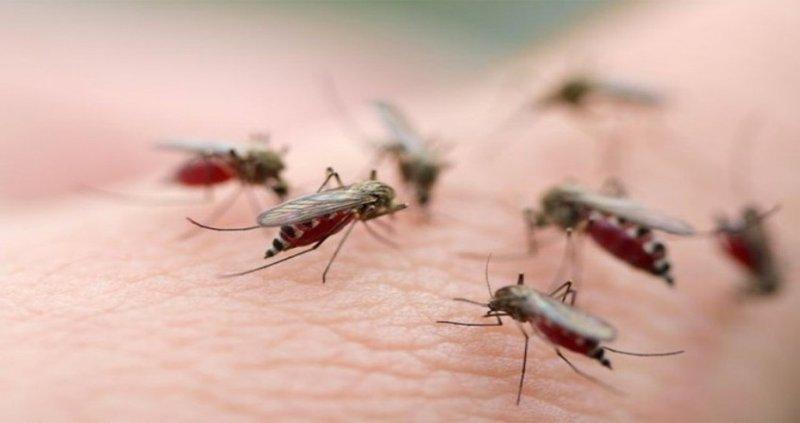 diệt côn trùng uy tín