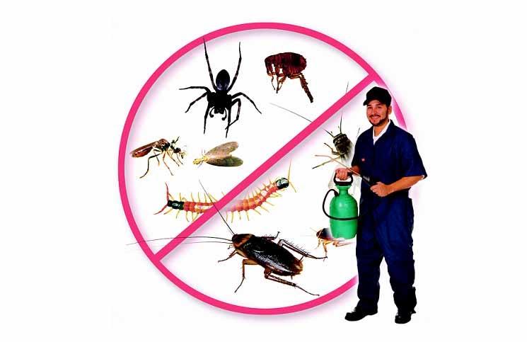 diệt côn trùng giá rẻ